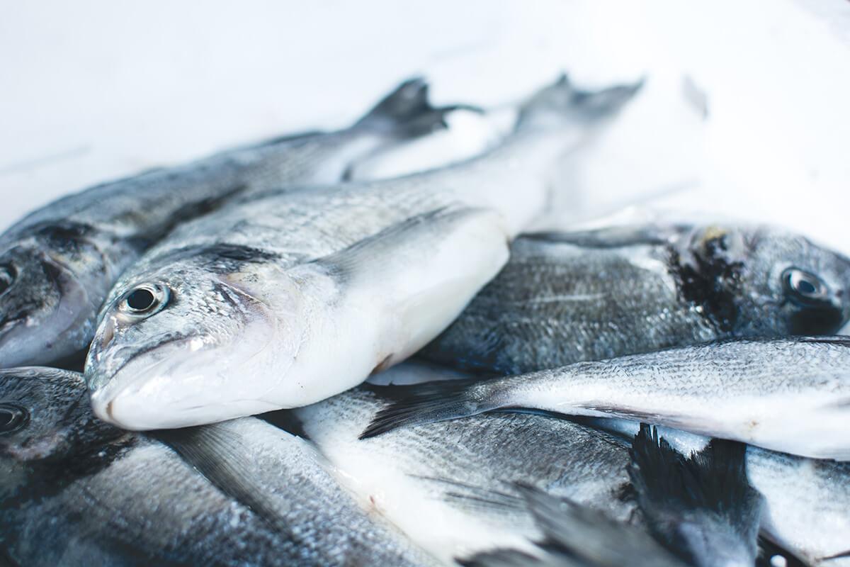Fisheries Performance Indicators – World Bank