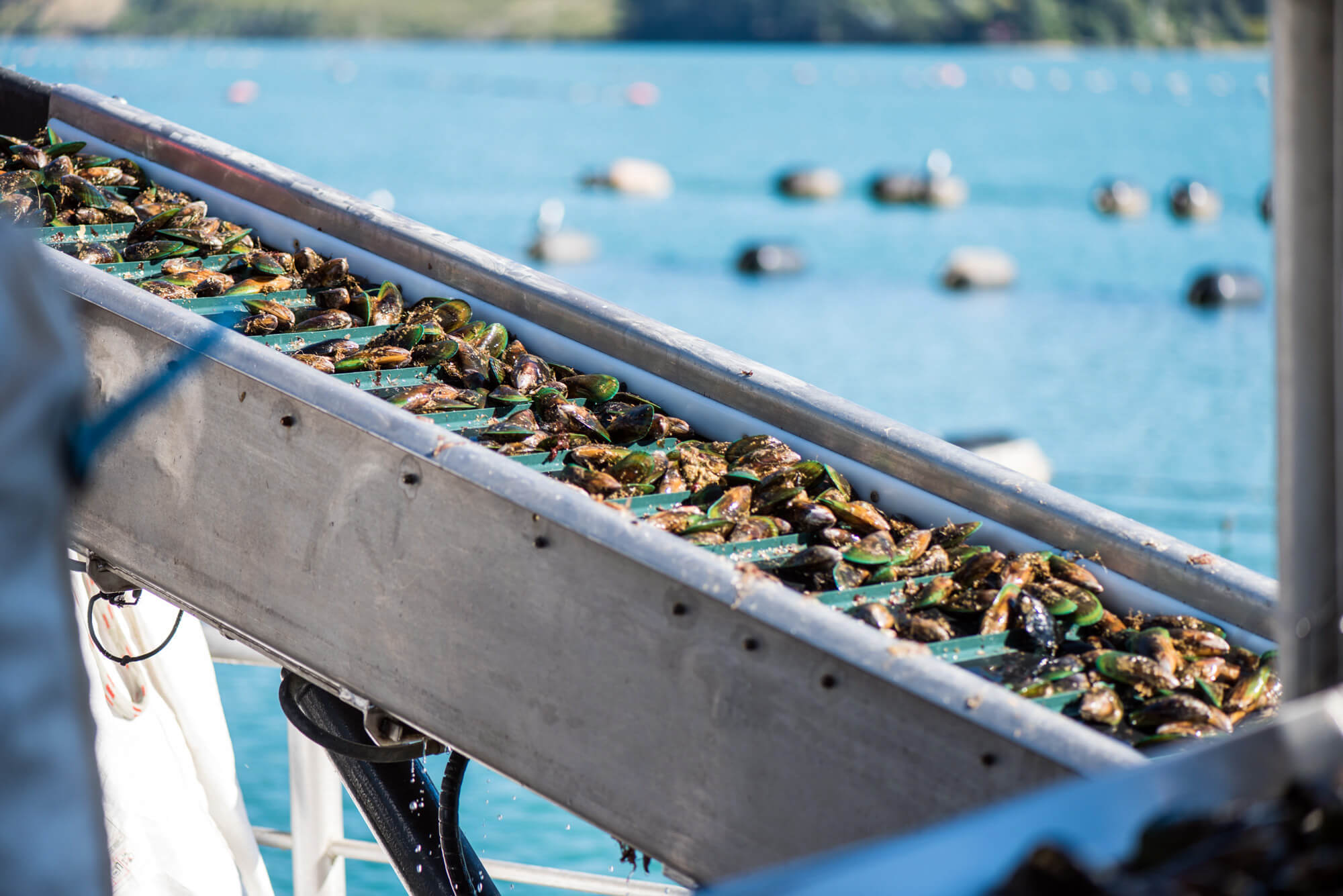 Mussel Spat Farm Investment Case – 90 Mile Beach